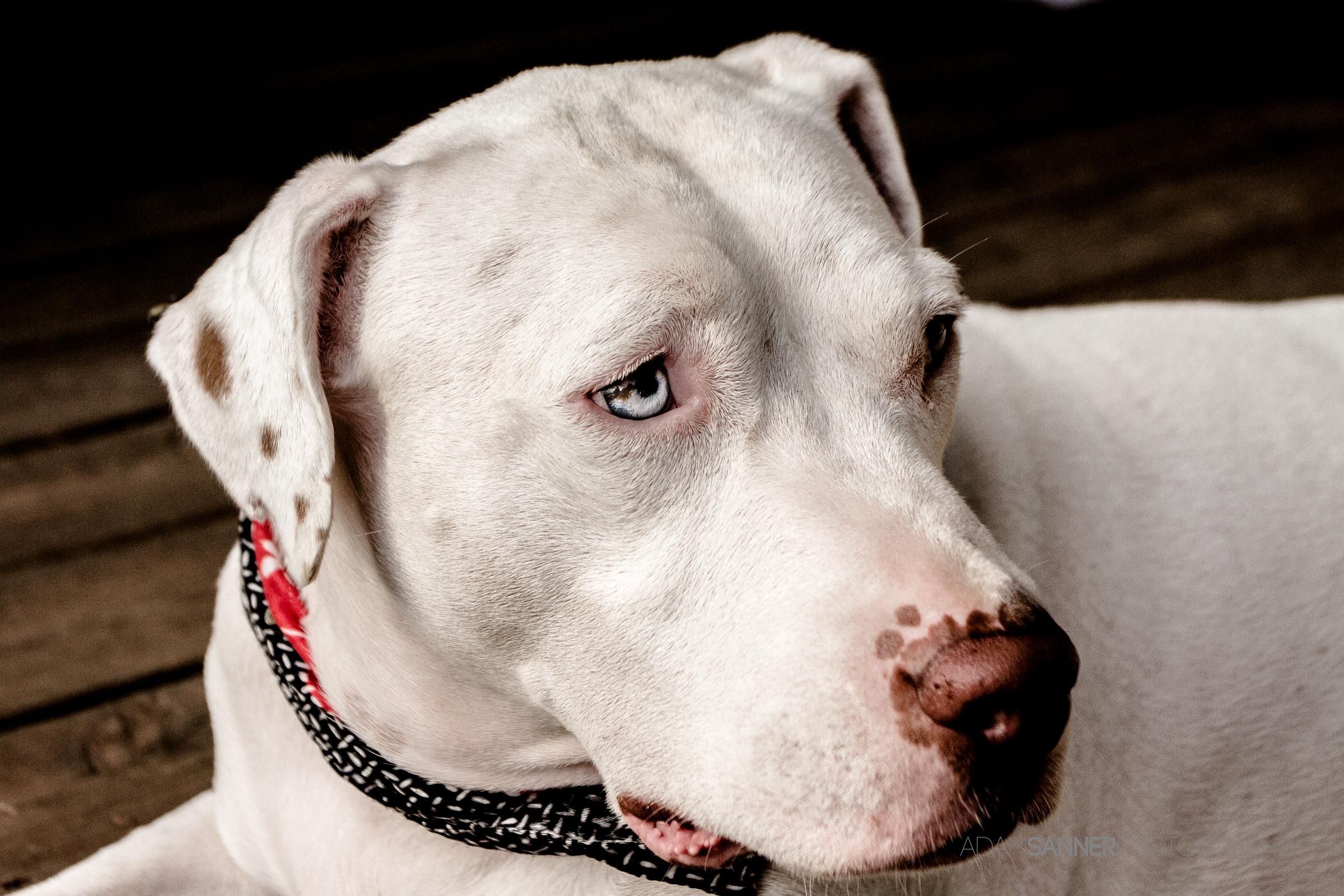 Dog (1 of 1)
