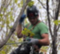 Services d'arboriculture, élagage, émondage, coupe d'arbres morts, tailles d'arbres, haies, arbustes
