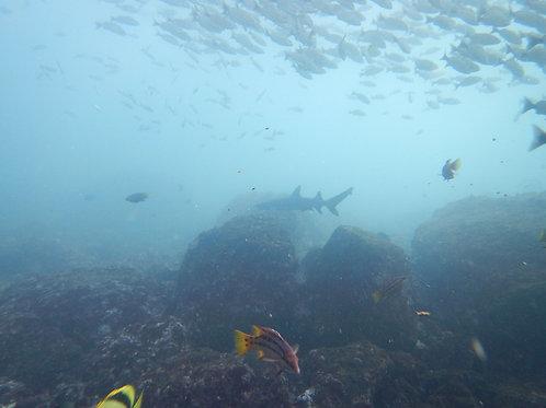 Marine fauna at the Catalina's Archipelago