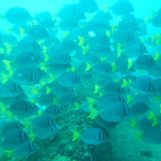 SchoolFish3.JPG