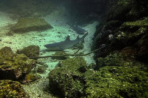 Shark nap time