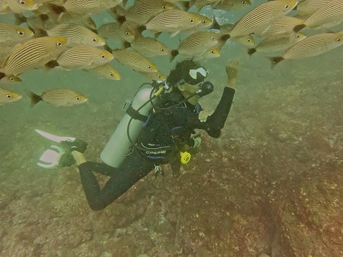 Luis diving with grunts