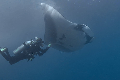 Interacting with a Giant Manta Ray