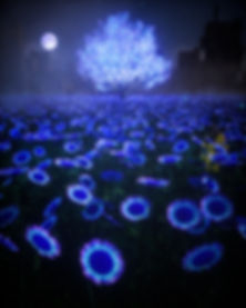20200408_Sunflower_0005_Final.jpg