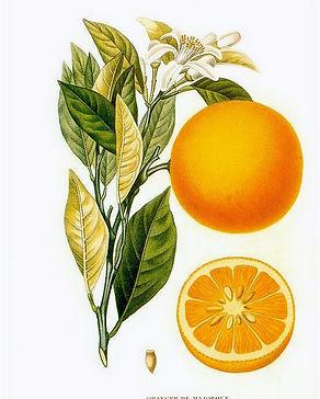 Arancio%20Dolce%20Histoire_et_culture_de