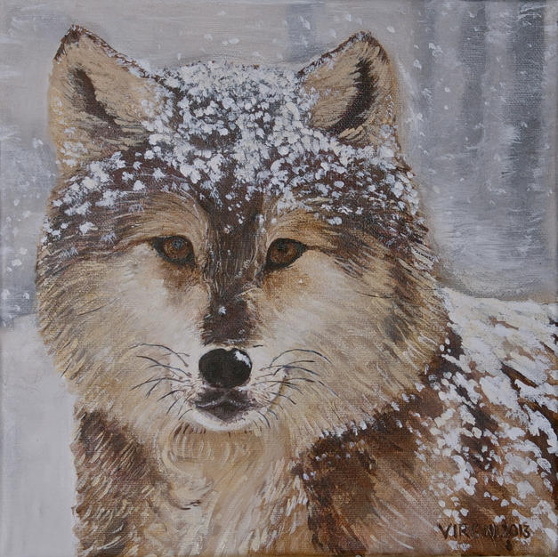 Snowy Young Wolf