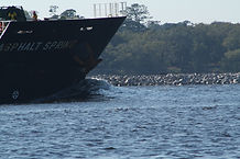 Cape fear Audubon society | Cape fear eco tours | Ft fisher tours | things do in Carolina Beach