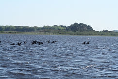 Cape fear Audubon society | Cape fear birding | Ft fisher tours | things to do in Carolina Beach