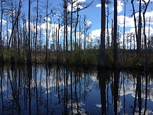 | Cape fear river tours | Fort fisher tours | alligator's on the cape fear | kids boating in Carolina Beach