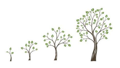 The Growing of Faith Seeds