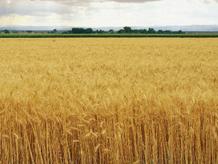 Sheaves and Charity - Lessons of Harvest