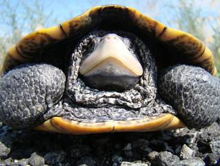 """¿Qué es el """"turtling"""" y cómo evitarlo?"""