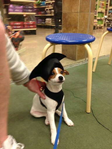 PetSmart Graduate!