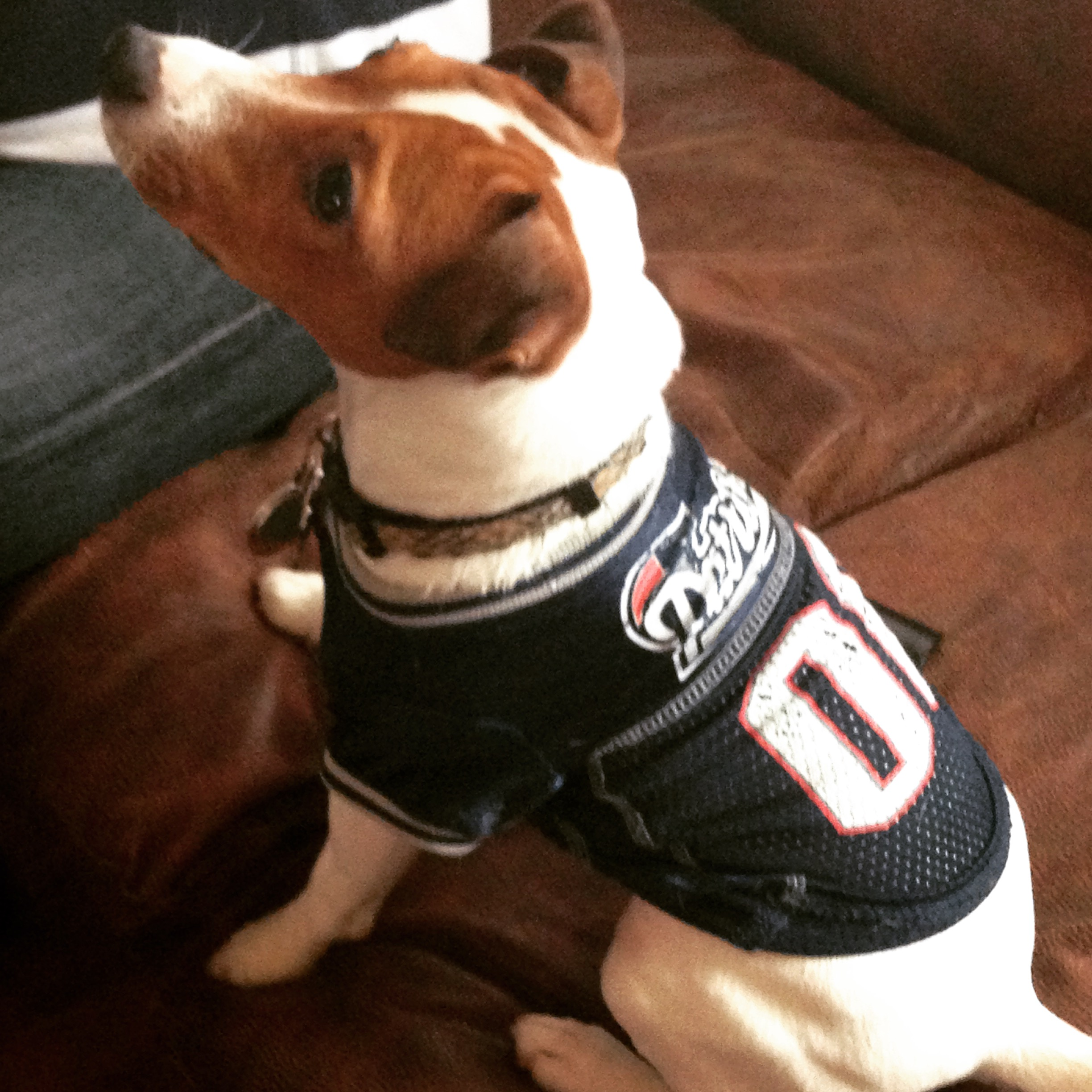 Die Hard Patriots Fan