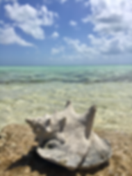 beach shell.PNG