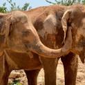 Tree Tops Elephant Reserve Phuket