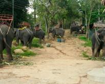 Elephantcamp.jpg