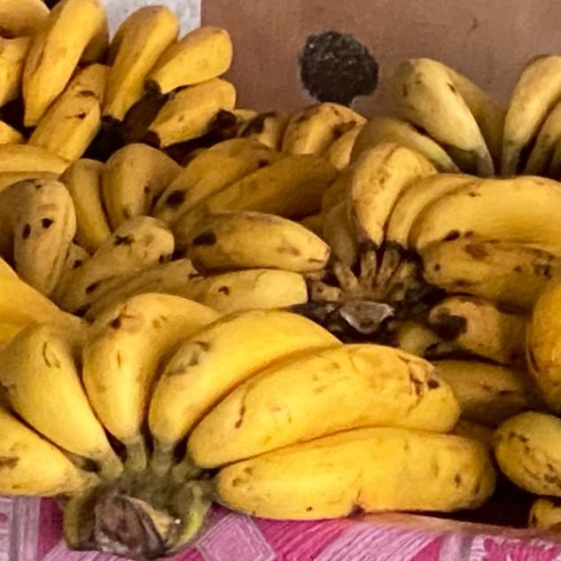 Bananas for Elephants