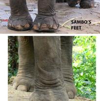 Sambo's feet1.jpg