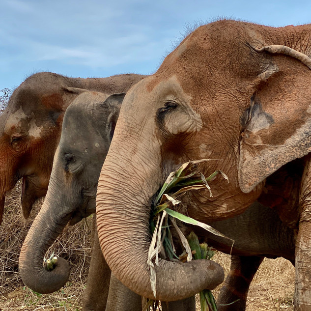 Elephants at Tree Tops