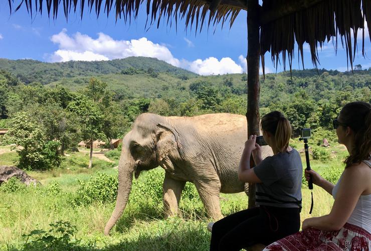 Tree Tops Elephant Reserve Phuke