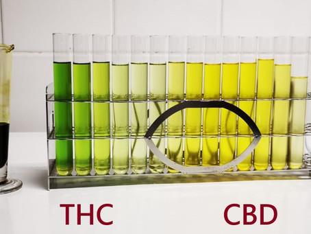 Experimento da semana: Purificação de Cannabis