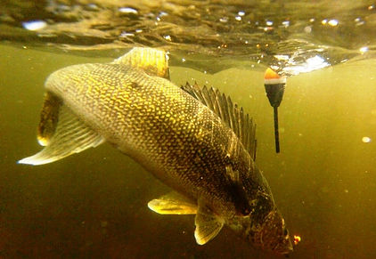 Minnesota Walleye Fishing