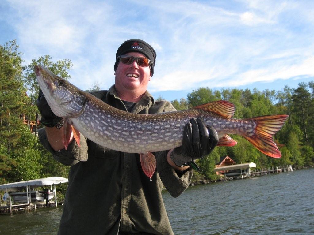 Giant Pike