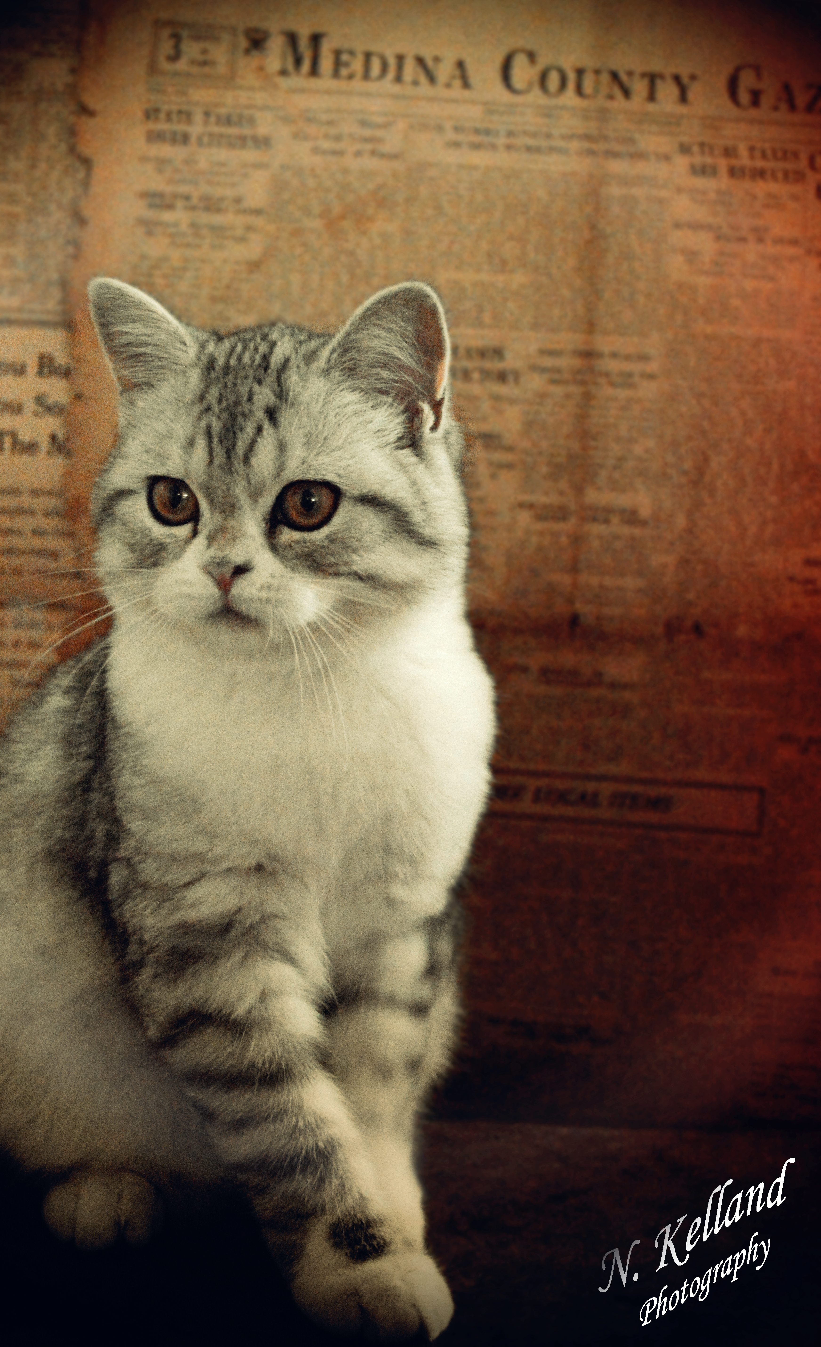 PHOTO GALLERY | Emmers Scottish Fold