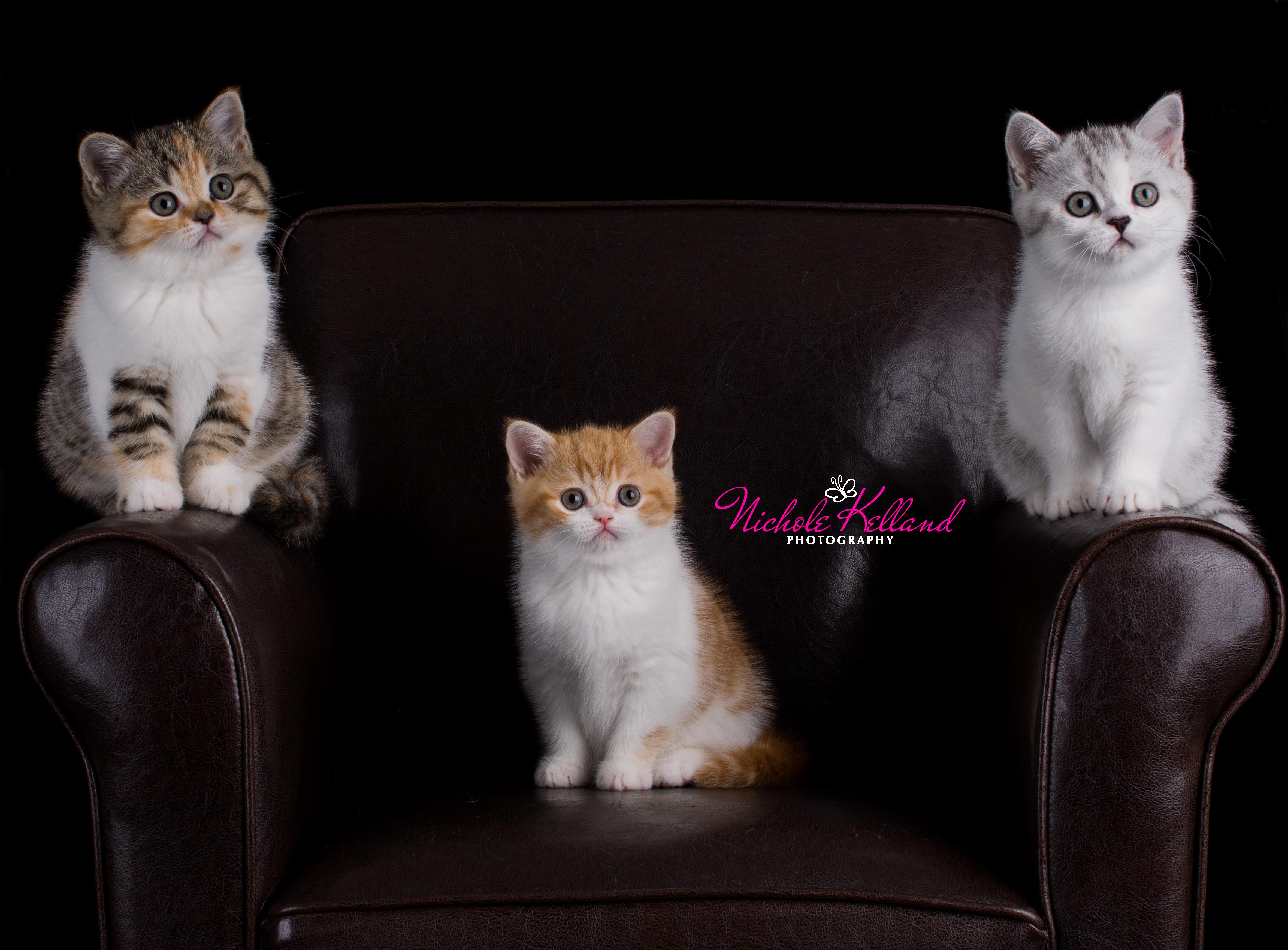 Chair of cuteness
