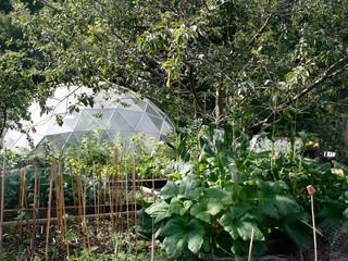 Veg+garden2.jpg