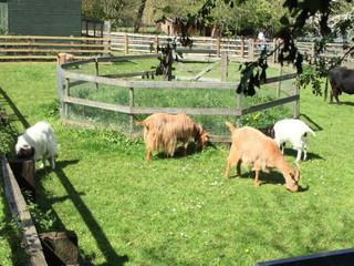 animals in field.jpg