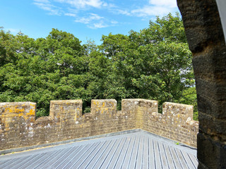 Tree-top-view-from-castellations.jpg