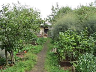 Veg+garden.jpg