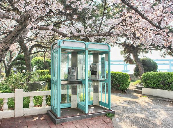12967880_MotionElements_cherry-blossoms-
