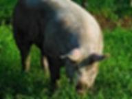 牧場,養豚場,養鶏場,防犯カメラ,セキュリティシステム