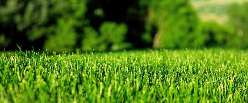 Lawn 2.jpg