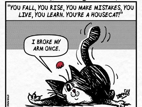 #343: Housecat
