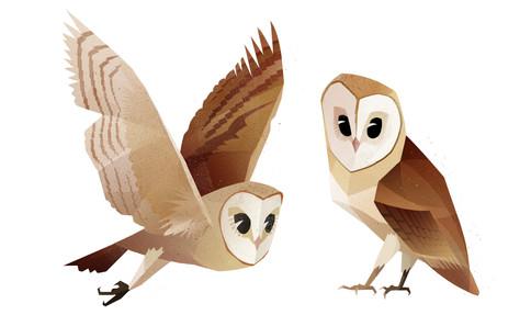 barn-owls2_website.jpg