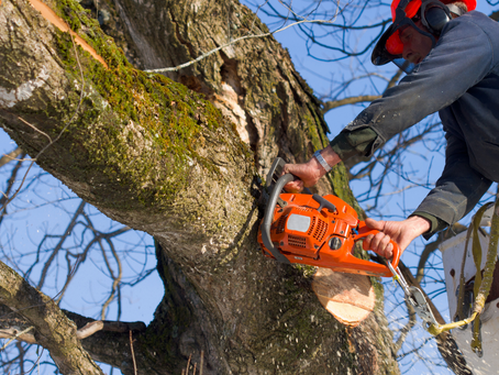 Signs That It's Time to Remove a Tree