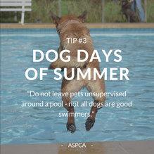 Summer Dog Tip #3 INSTA.jpg