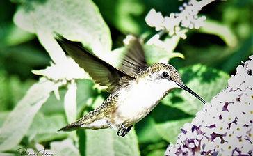NATURE -LANDSCAPE- AIR SHOW - BIRDS - PLANTS