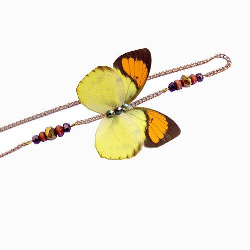 Headband papillon Pieridae Ixias pyrene