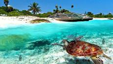 Riviera Maya y Miami - 12 días solo 1290€.