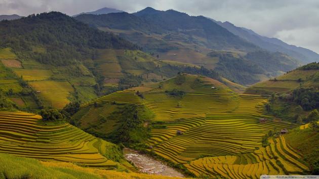 rice_terraces_vietnam-wallpaper-1920x1080.jpg