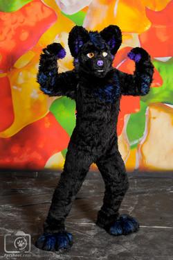 Dark the Husky