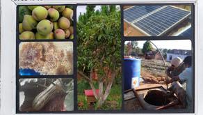Pompe solaire et production....
