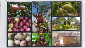 Entretien des fruitiers et production