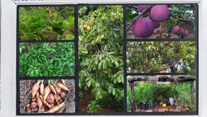 La production : fruits, légumes et plants