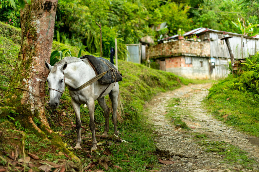 Los caballos son una valiosa ayuda para transportar mercancias